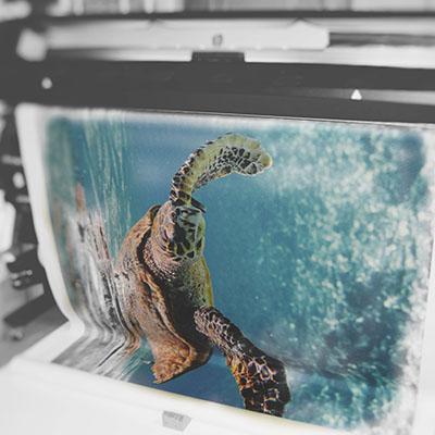 photo-atelier-impression-en-cours-tortue-3.jpg